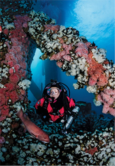 Underwater diver amid beams encrusted thick with corals